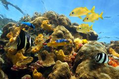 Thriving sea life in a coral reef Royalty Free Stock Photo