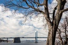 Throgs-Hals-Brücke und Baum NYC stockfotografie