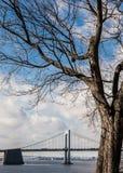 Throgs-Hals-Brücke und Baum NYC lizenzfreie stockfotografie