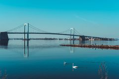 Throgs Neck Bridge with two swans swimming in foreground. Viewed from Little Bay park on a sunny day in Beechhurst, Queens, NY royalty free stock photography