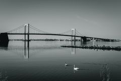 Throgs Neck Bridge with two swans swimming in foreground. Viewed from Little Bay park on a sunny day in Beechhurst, Queens, NY. Black and white royalty free stock images