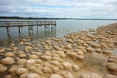 Thrombolites озера Клифтона Стоковое Изображение RF