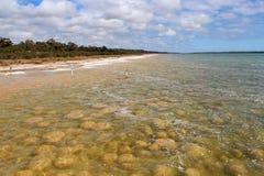 Thrombolites raros en el lago Clifton Australia del oeste fotografía de archivo libre de regalías