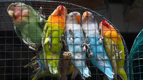 Depok Market Solo. Some birds was throng around in the bordcage at Depok Pets and Bird Market, Surakarta, Central Java, Indonesia. 8/8/2014. Depok Pets and Bird stock images