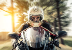 Throttle. Biker accelerating with his motorbike on the street Royalty Free Stock Photography