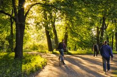 Throug οι πράσινες αλέες βραδιού στον κήπο Tavrichesky στοκ φωτογραφία με δικαίωμα ελεύθερης χρήσης