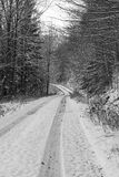 Throug the winter nature Royalty Free Stock Image