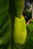 Througt солнечного света листья ладони Стоковое Изображение