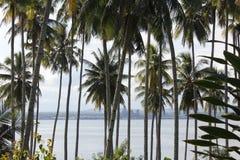 Throuh die Kokosnussbäume Lizenzfreies Stockbild
