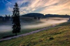 Throurh дороги луг около леса в тумане Стоковые Изображения RF