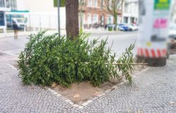 Throw away fir tree or christmas tree after new year, discarded christmas tree. Throw away fir tree or christmas tree after new year, discarded christmas royalty free stock image
