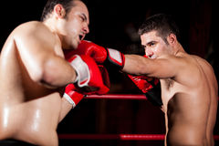 Throwing a jab during a box fight Stock Image