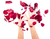 Throwing up the petals Stock Photos