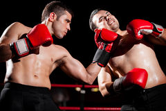 Throwing an uppercut during a fight. Male boxer being defeated by his opponent with an uppercut during a box fight royalty free stock photos