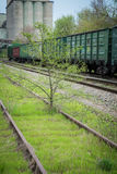 Thrown railroad which has grown with trees royalty free stock images