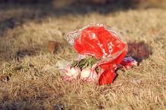 Thrown red bouquet of wilted flowers on the dry grass under the summer sun. Dramatic story of love sunny background wallpaper Royalty Free Stock Images