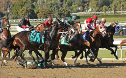 Thrown at the Start!. ARCADIA, CA - JAN 17: Jockey Agapito Delgadillo  (#9) is unseated by Harlington Night as the gates open for a maiden race at Santa Anita Stock Photo