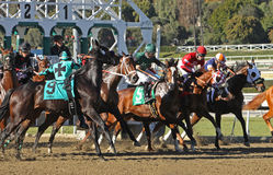 Thrown at the Start!. ARCADIA, CA - JAN 17: Jockey Agapito Delgadillo  (#9) is unseated by Harlington Night as the gates open for a maiden race at Santa Anita Stock Photos