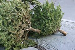 Thrown trees Stock Image