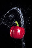 Thrown water and a pepper. Royalty Free Stock Photo