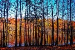 Thru Trees Landscape Stock Image