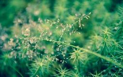 Thrunton森林的Bokeh植物 免版税库存照片