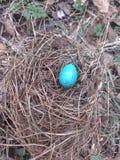 Nest of thrush Stock Photography