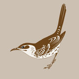Thrush silhouette Royalty Free Stock Photo