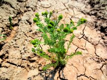 Thrust to life. Even in the desert life takes its roots Stock Photo