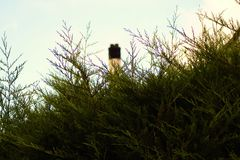 Thuja and chimney. Chimney protruding above the bushes Stock Images
