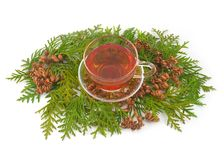 Thuja curative Stock Images