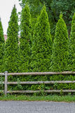 Thuja Fence Royalty Free Stock Photography