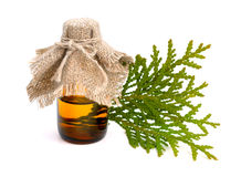 Thuja foliage with essential oil. Isolated. Stock Photos