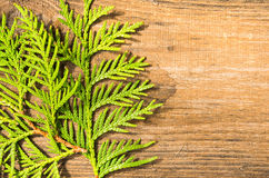 Thuja leafes on old wood Royalty Free Stock Images