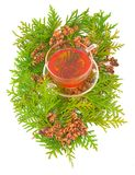 Thuja medicinal. Thuja plant evergreen coniferous decorative curative medicinal kidneys seeds fruits with green branches on white background and broth tincture Stock Photos