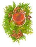 Thuja Medicinal Stock Photos