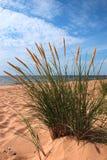 thuja na plaży Zdjęcia Royalty Free