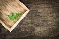 Thuja Orientalis leaf on wood tray Stock Photo