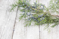 Thuja twigs on wooden background with copy space Royalty Free Stock Photo