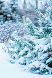 Thujabäume bedeckt mit Schnee im Garten Lizenzfreies Stockfoto