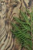 Thujablad på träbakgrund Fotografering för Bildbyråer