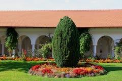 Thujaträd och blommor Royaltyfria Bilder