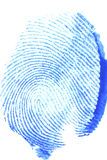 Thumb print. A thumb print with blue paint isolated on a white background Stock Photo