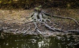 Thumb at the riverbank. Close-up a mystical thumb with roots at the bank of river Royalty Free Stock Photo