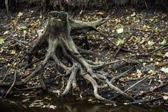 Thumb at the riverbank. Close-up a mystical thumb with roots at the bank of river Stock Photo