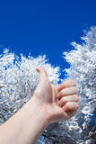 Thumb up in winter. At blue sky and snowy tree background stock photo
