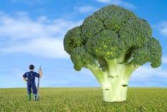 Thumbnail farmer along a broccoli Royalty Free Stock Image