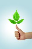 Thumbs up. With green foliage Royalty Free Stock Photography