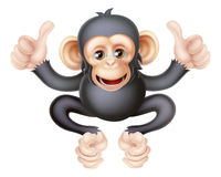 Thumbs Up Chimp Monkey Royalty Free Stock Photography
