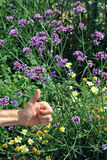 Thumbs up for flowers and nature Stock Photography